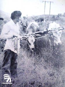 "Persona, vacas, electrificación 70"", electrohuila"