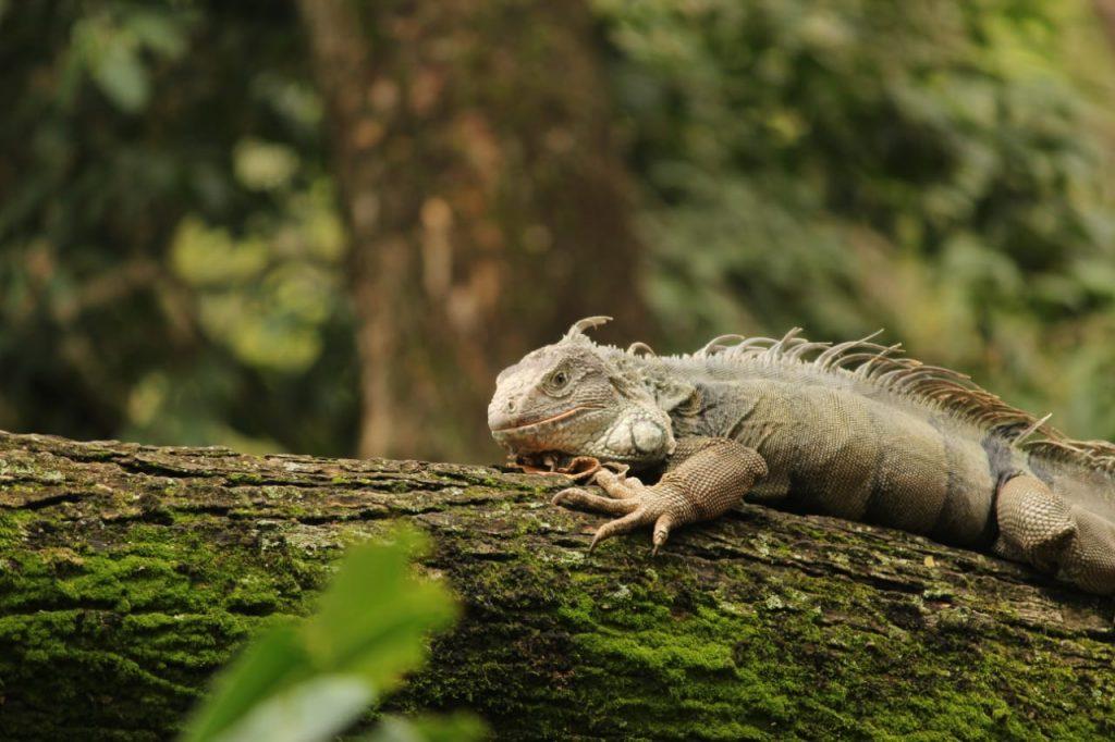 Galería – Los animales del sendero ecológico de Electrohuila